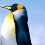 Zdjęcie profilowe cvanka