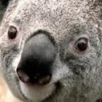 Zdjęcie profilowe mjacobson